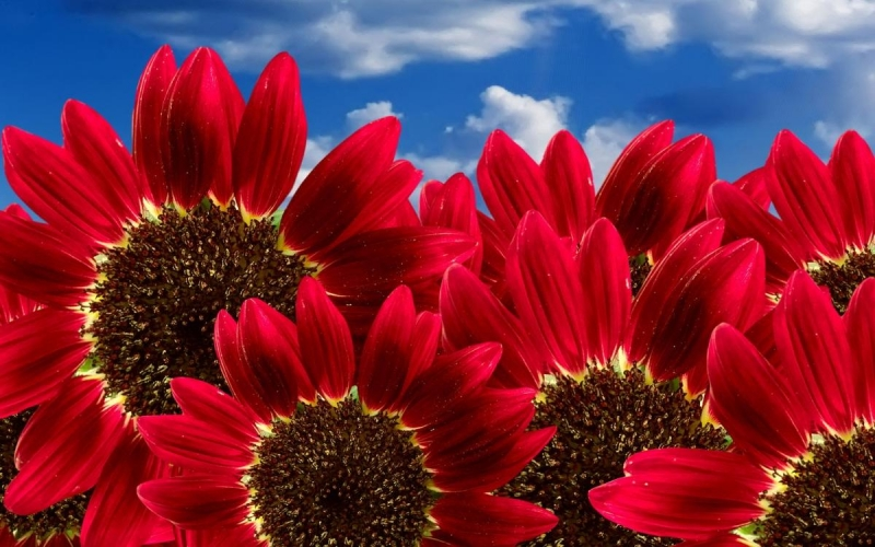 Sfondi-HD-fiori-per-desktop-primavera