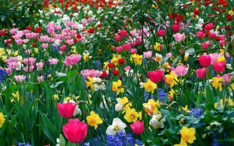Stupendi-fiori-sfondi-per-Desktop-4