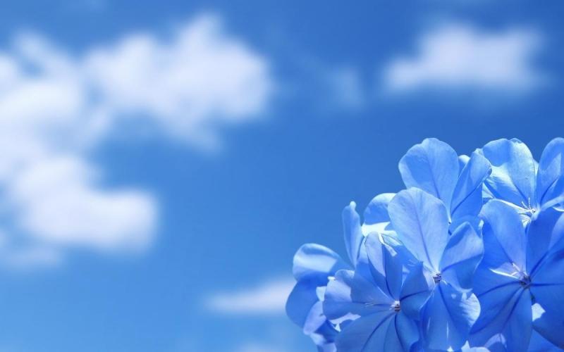 fiori 0