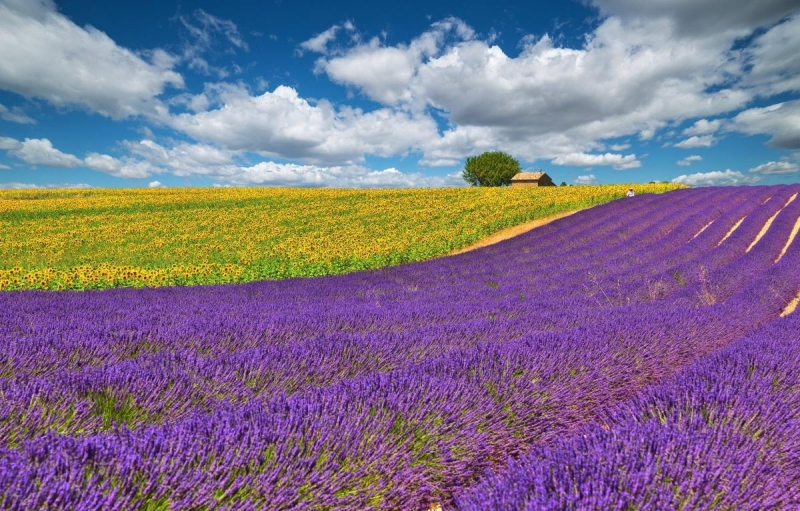 france-provence-field-flowers-lavender
