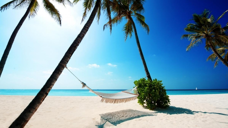 palms-and-hammock-2560x1440-wallpaper-5431