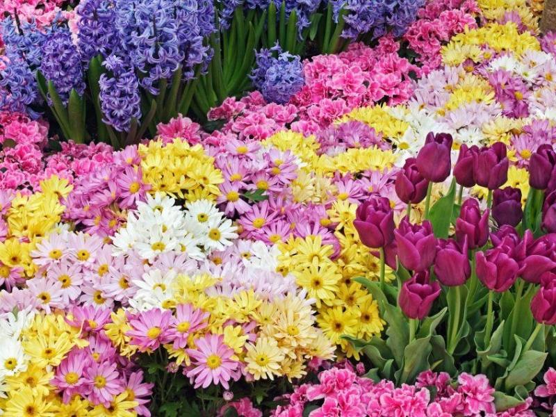 primavera-fiori-sfondi202