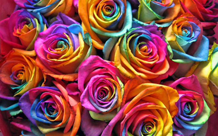 thumb2-colorful-roses-macro-rainbow-flowers-bouquet-of-roses-bokeh