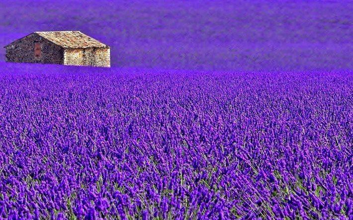 thumb2-provence-lavender-meadow-house-plantation